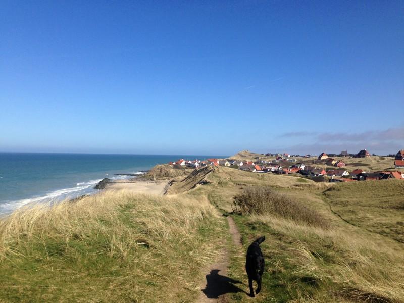 En fri og glad hund på påskeferie i den lille byen Lønstrup ved Vesterhavet i Danmark.